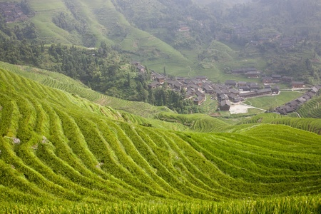 cropland: Rice Terraces Stock Photo