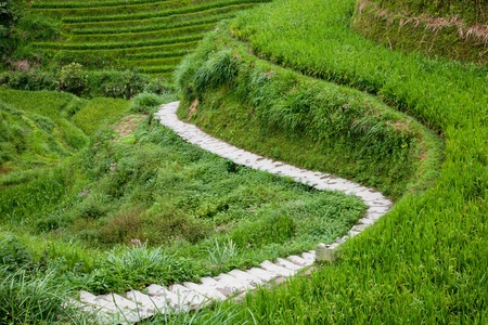 Path through paddy terraces photo