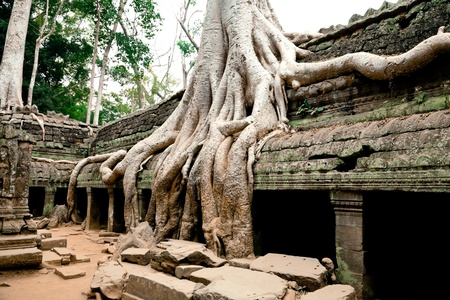 Ta Prohm Temple, Angkor Wat, Cambodia Stock Photo - 8965570