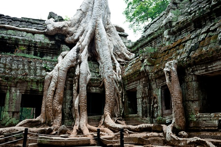 huge trees at Ta Prohm Temple, Angkor Wat, Cambodia