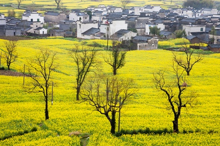 China rural landscape of villages in the rapeseed field  免版税图像