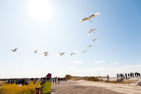 migrating animal: Visitors are watching cranes flying above their heads, Zhalong Nature Reserve, Qiqihar City, Heilongjiang Province, China.
