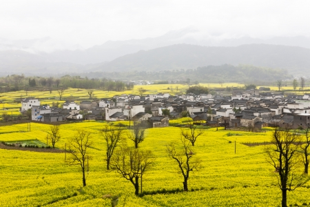 terraced: Rural landscape of white houses in yellow oilseed rape fields  Anhui Province, China