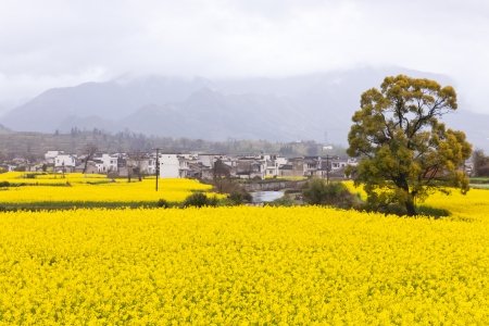 spring rainy landscape in wuyuan, China photo