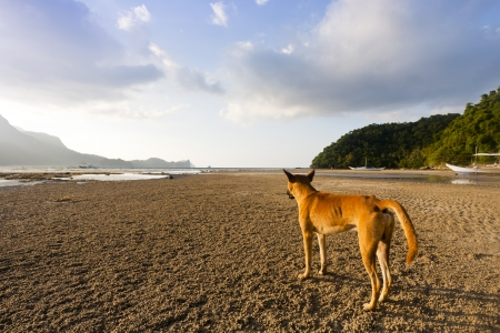 A loney dog looking at distant place on the beach photo