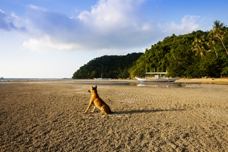 lonely dog at beach photo