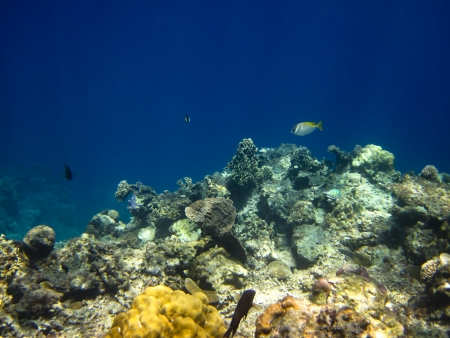 bohol: Background of underwater sea with fish and reef