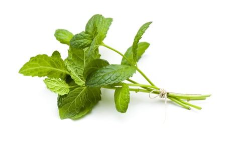 menta: Ramita de menta fresca sobre fondo blanco Foto de archivo