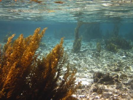 alga marina: Alga Foto de archivo