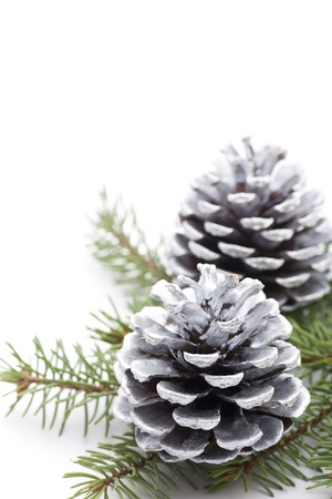 Silver pine cones with copy space Stock Photo - 16565463