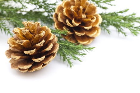 Christmas ornament - gold pine cones with copy space  Stock Photo - 16565577