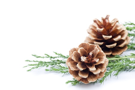 Pine cone border, isolated on white