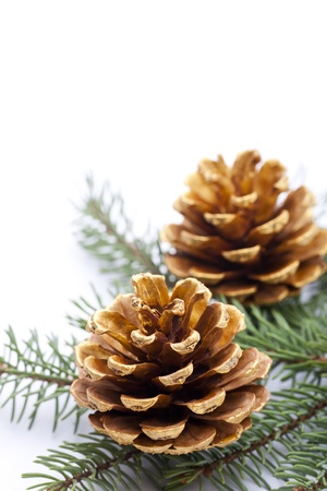 Gold pine cones on white background, copy space for text Stock Photo - 16565074