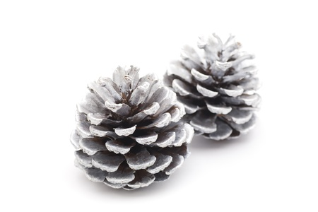 silver pine cones Stock Photo