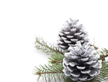 Silver Christmas Pine Cones on white background  Stock Photo - 18243915