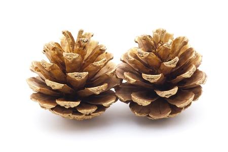 golden pine cones Stock Photo - 18243916
