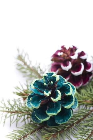 Colorful pine cones on white background Stock Photo - 16691549