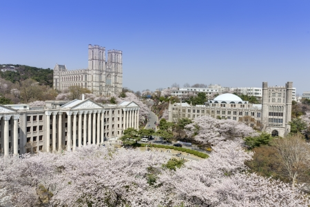 south asian ethnicity: Kyung Hee University is a one of the most famous university in Korea. It is comprehensive and private. There are very beautiful cherry blossoms in the campus during spring season.