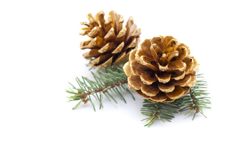 christmas ornaments: Pine cones with branch on a white background Stock Photo