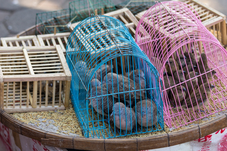 Small bird trapped in a cage placed on a colorful basket. Stock Photo