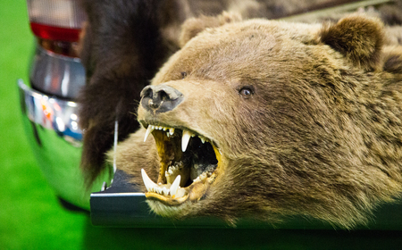 The head of a bear with bared teeth and taillights of a car