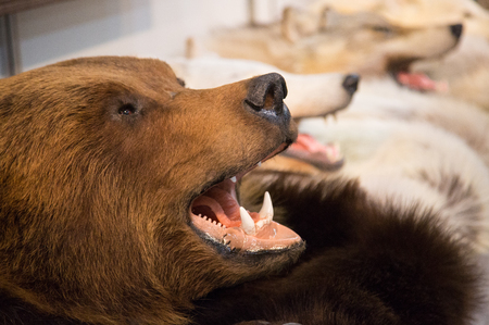 The head of a brown bear with bared teeth and the head of wolves ,scarecrow