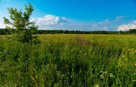 Russian field in summer in Russia