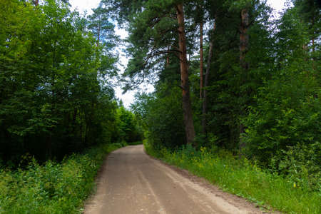 forest dirt road in summer
