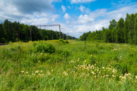 Green field of grass and flowers next to the railway 写真素材