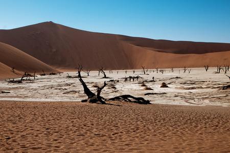 kalahari desert: kalahari desert Stock Photo