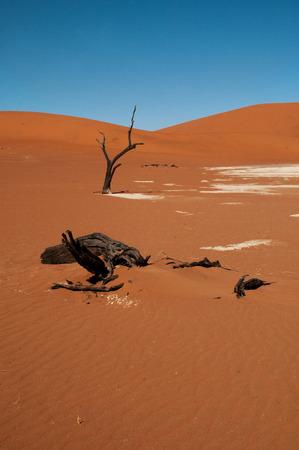 uninhabited: Namib desert