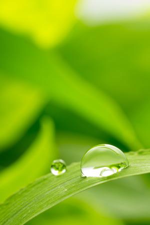 sfondo verde con gocce di pioggia, girato con molto poca profondità di campo Archivio Fotografico