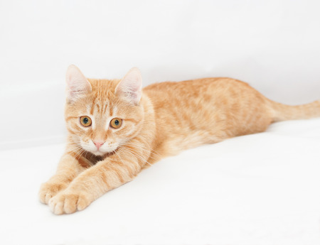 Ginger kitten, looking sadly into the distance, stretching his front legs Stock Photo