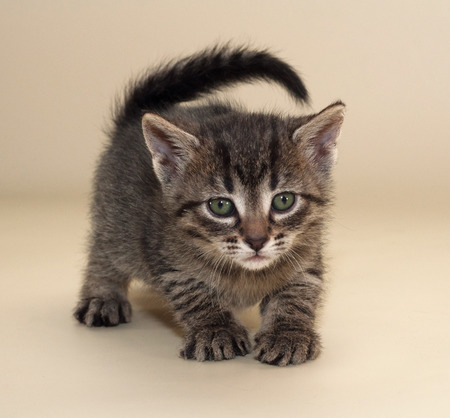 sneaks: Small fluffy tabby kitten with green eyes sneaks up on yellow background Stock Photo