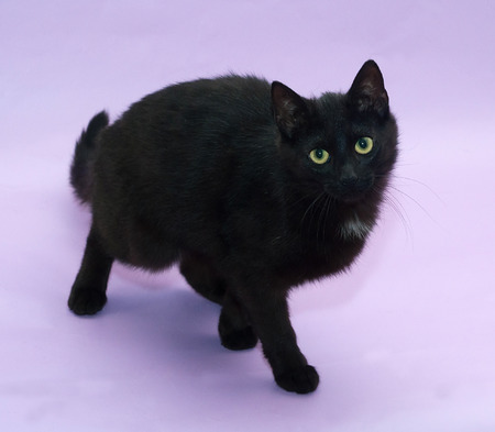 sneaks: Black cat with yellow eyes sneaks up on purple background