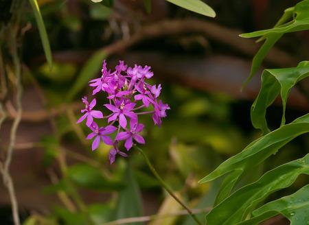 small purple flower: Small purple flower in grass