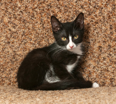 Black kitten with white spots sitting on brown couch photo