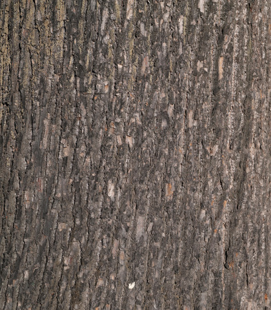 Texture of tree bark covered with green moss photo