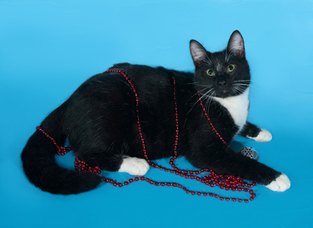christmas beads: Black and white cat wrapped Christmas beads lies on blue background