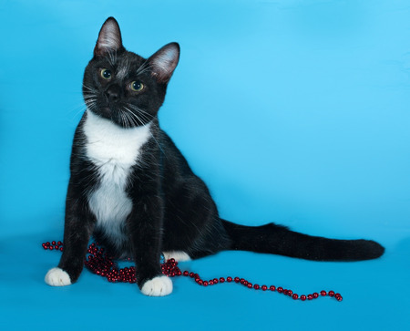 christmas beads: Black and white cat with Christmas beads sitting on blue background