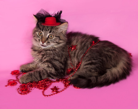 christmas beads: Striped fluffy kitten with Christmas beads lying on pink background