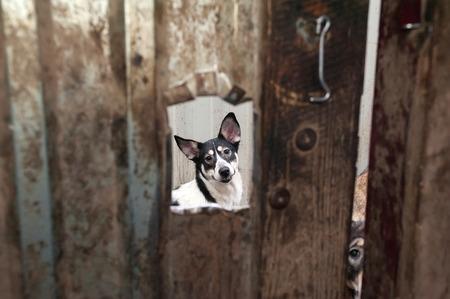 through window: White and black dog peeking through window in dirty gate