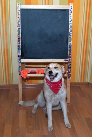 bandanna: Red dog in red bandanna sitting next to blackboard