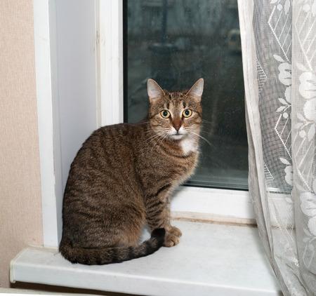 windowsill: Striped cat sitting on white windowsill Stock Photo