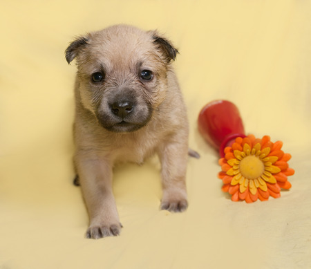 artificial flower: Little yellow puppy with artificial flower sits on yellow background Stock Photo
