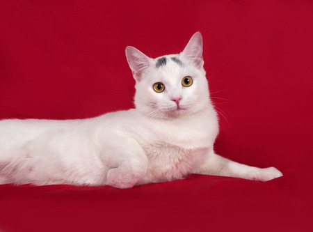 gray cat: White cat with gray spots lies on red background