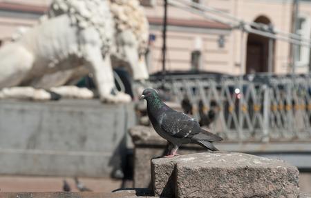 parapet: Pigeon sitting on granite parapet