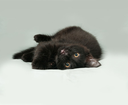 Black fluffy kitten lies on gray background Stock Photo
