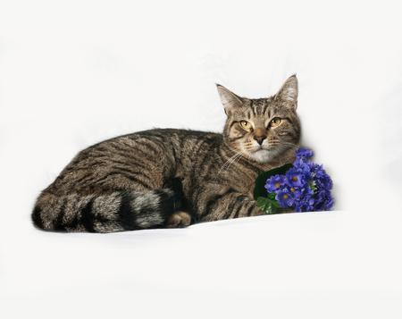 gray cat: Tabby cat lies on gray background Stock Photo