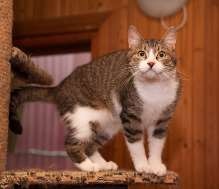 grey tabby: Grey tabby cat and kittens standing on scratching post Stock Photo
